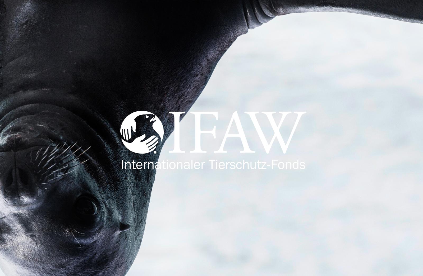 IFAW_1 Kopie